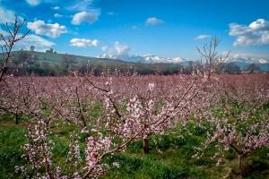 agriturismo-barba-alberi-fioriti